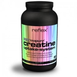 Creatine Uptake System